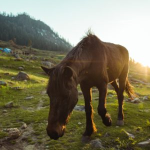Horse in the Valley